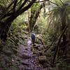 1010350 Franz Josef hiking to Alex Knob Lookout