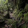 1010378 Franz Josef hiking to Alex Knob Lookout