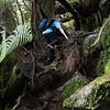 1010385 Franz Josef hiking to Alex Knob Lookout