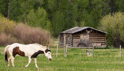 Horses of Jackson Hole