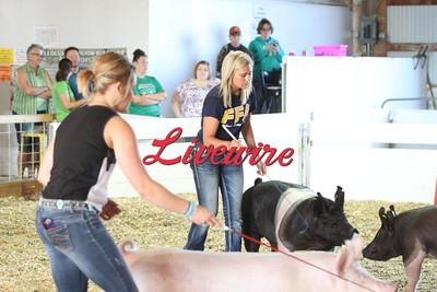 4H Pig Show 2015
