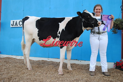 Dairy Cattle Show 2016