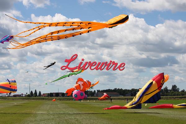Kite Fly_9952