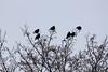 Birds_2968