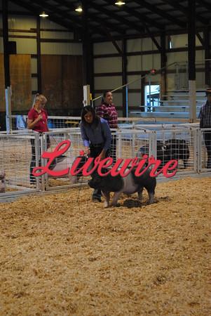 Swine Show 2016