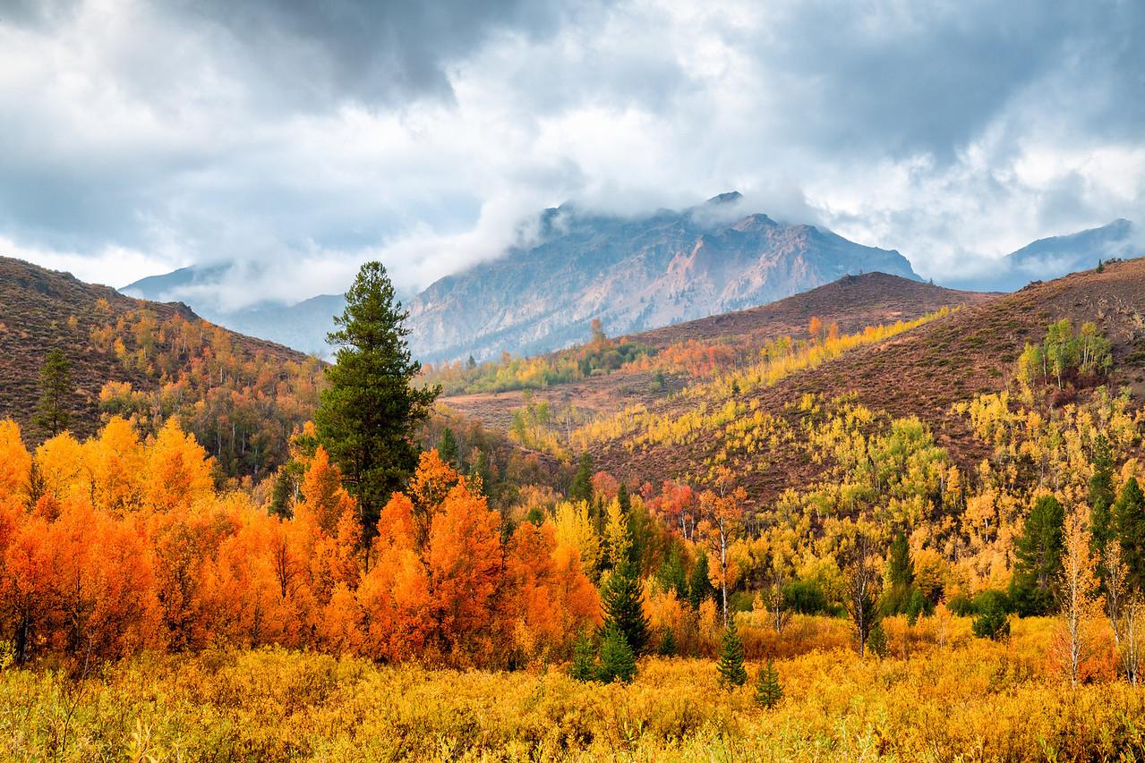 Autumn in Idaho
