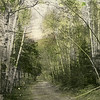 Forest-road-WEB