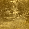 horse&buggy-WEB