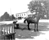 062. W.C. Duncan and horse at corner of River and Main Streets with Bank and Granite State Hotel in background. Date: 1896. (View 069 is dated 1897 and appears to have taken at the same time, so either 1896 or 1897.)
