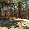 Wooded area along Blackberry Lane.