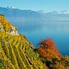 Herbstliche Lavaux