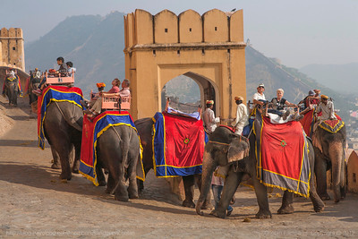 Elephants dressed in colourful clothes give a ride to the tourists at the Amer fort in Jaipur, Rajasthan.