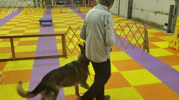 20190615 Stunt Dog