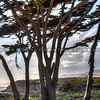 jalama-tree-3070-