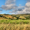 jalama-hills-3136-
