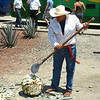 A Jimadore Shows How An Agave Pina Is Harvested