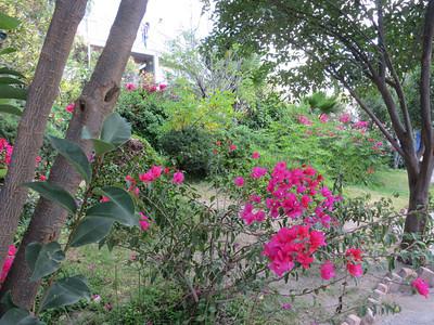 Flowers In Bloom Everywhere