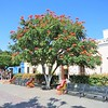 Beautiful Blooming Trees Add To The Pretty Plaza Jardin