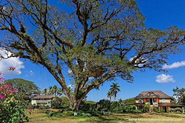 JAMAIQUE. Pantrepant, la propriété de Chris Blackwell. Une superbe ferme historique aux portes du pays Cockpit dans laquelle l' ancien producteur de Bob Marley loue deux chambres.