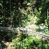 Mystic Mountain- bobsledding through the rainforest