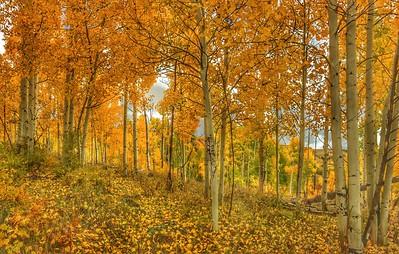 Fall Colors on Hwy 12 in Utah