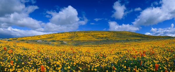 Poppy Reserve California Spring Panoramic