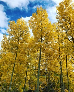Fall Colors on Hwy 12 in Utah
