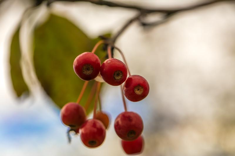 Random Berry