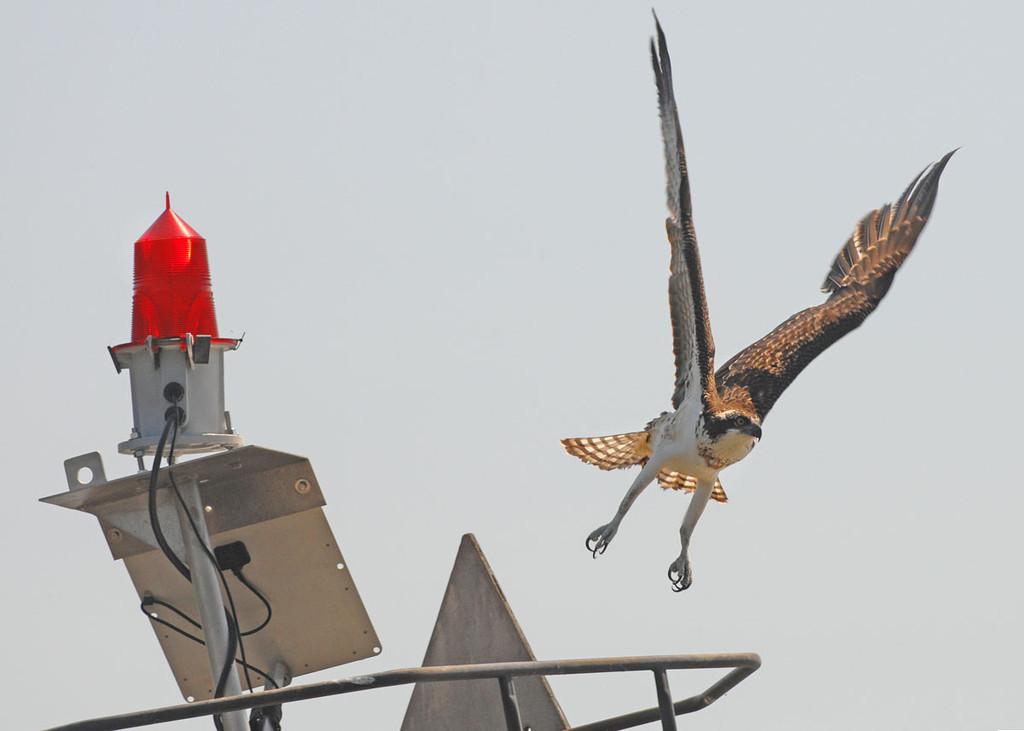 ...takes flight...