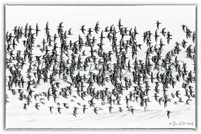 Flight Pattern (20140107)