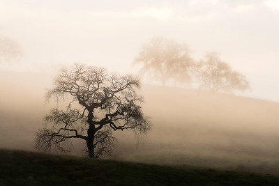 The Mist of Dawn