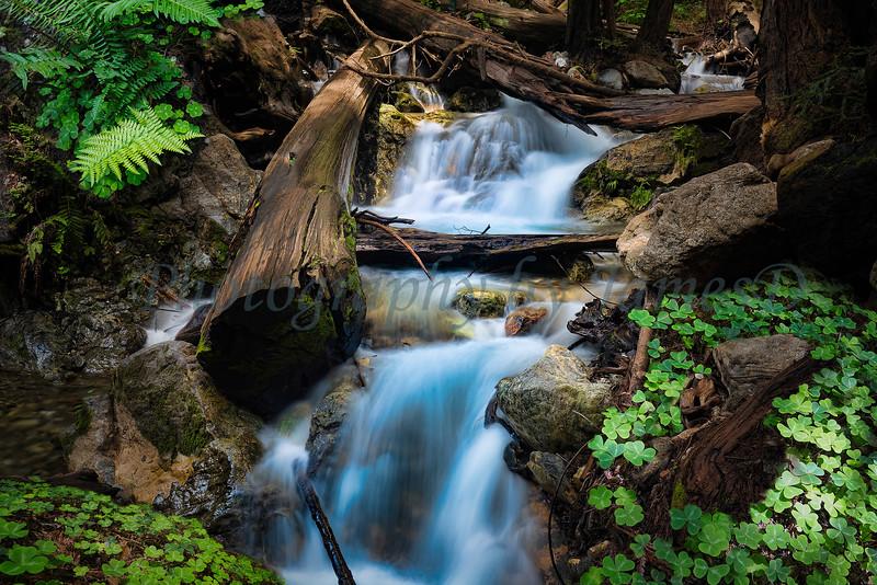 Lime Kiln Creek (20150426-1147)