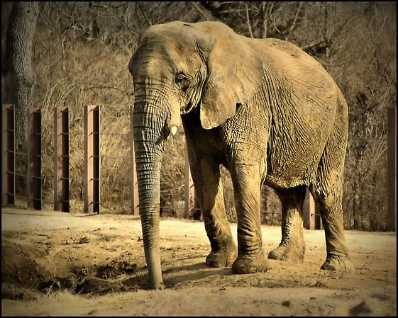 Jan 2015 Kansas City Zoo