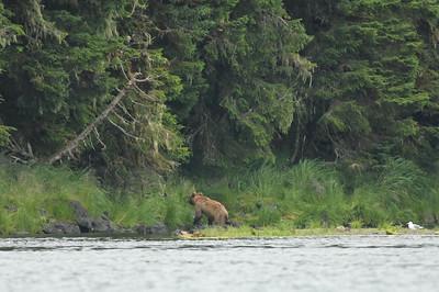 Valdez, Prince William Sound, Grizzly, Galena Bay