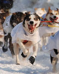 14_Ed_Iten_Dogs_1