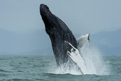WhaleBreach_5398