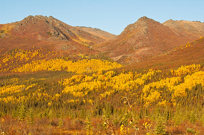 Dalton Highway, Fall Colors