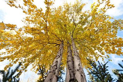 Trees-6452