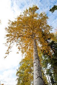 Trees-6405