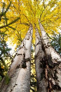 Trees-6449