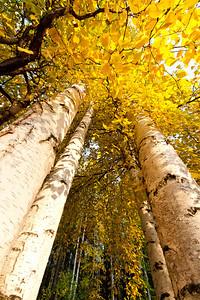 Trees-6568