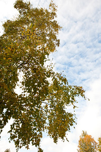Trees-6374