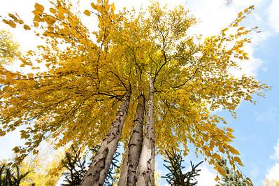Trees-6436