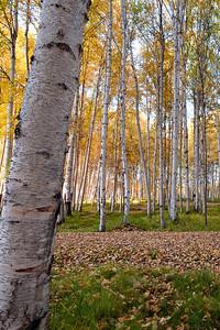 Trees2-6884
