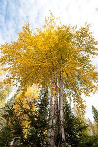 Trees-6354