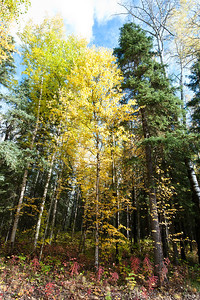 Trees-6432