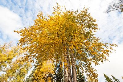 Trees-6353
