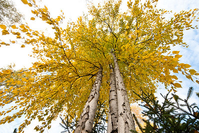 Trees-6363