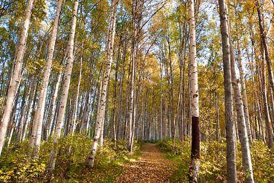 Trees-6715