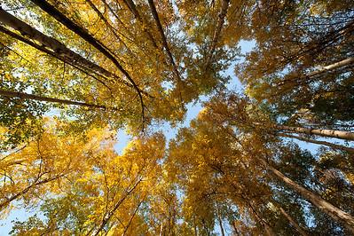 Trees-6693